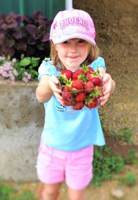 Bures Berry Patch - Strawberries