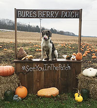 Bures Berry Patch - Pumpkins